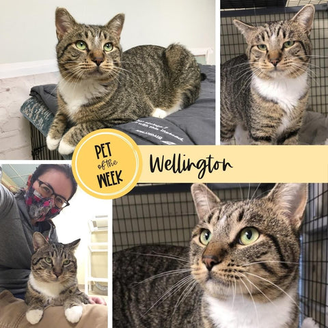 Persnickety Pets: Pet of the Week Wellington