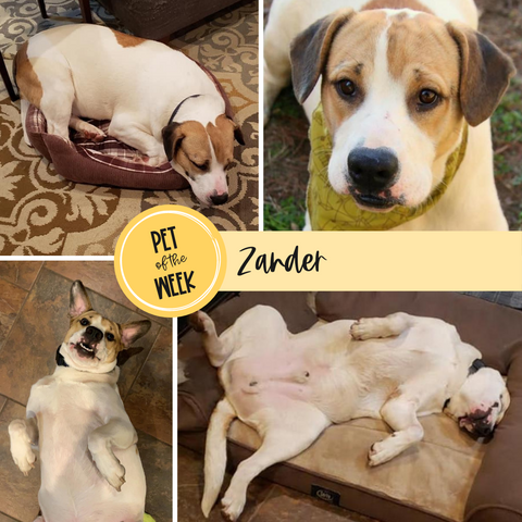 Persnickety Pets Pet of the Week: Zander