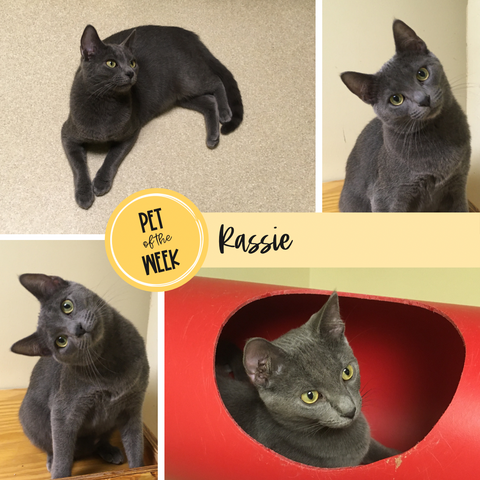 Persnickety Pets: Pet of the Week Rassie from ARF