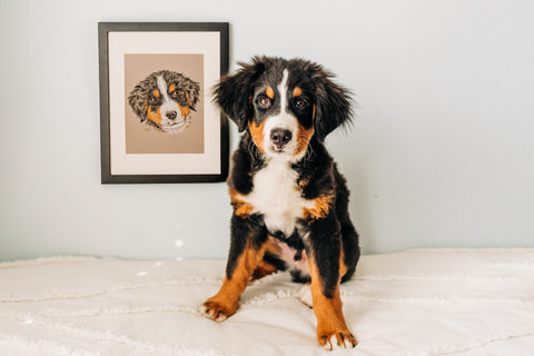 Persimmon Peak: Custom Hand-drawn Pet Portrait of Jupiter, photography by Brittany Tinsley Photography