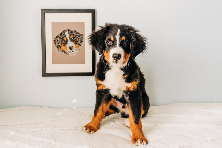 Persnickety Pets: Jupiter with his portrait, Brittany Tinsley Photography