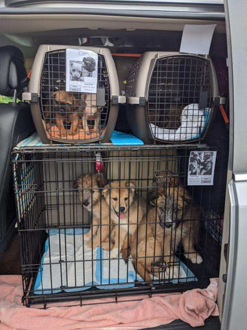 Persimmon Peak: dog transport with ID cards on each crate