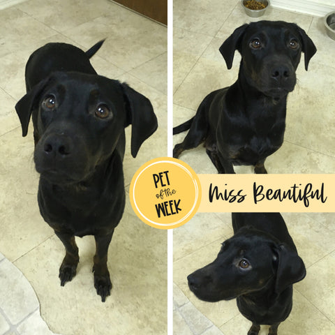 Persnickety Pets: Pet of the Week 2/2/2021, Beautiful