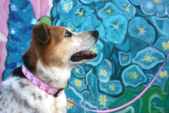Persnickety Pets: Pink prisms classic dog collar