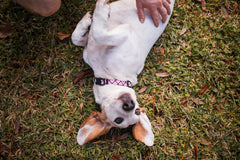 Persnickety Pets: Laura Skellie Photography