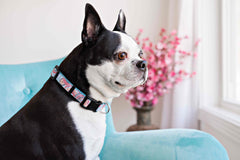 Persnickety Pets: classic dog collar, Photography by Kim Smith