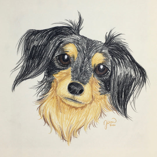 Persnickety Pets: hand-drawn pet portraits by Jen Siow