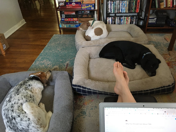 Persimmon Peak: Working from home with dogs