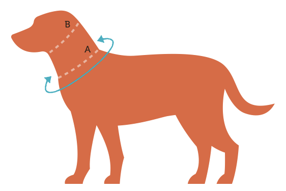 Persimmon Peak: measuring your dog for a new collar