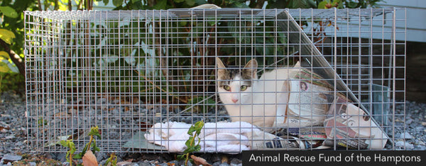 Animal Rescue Fund of the Hamptons: feral cat in a trap