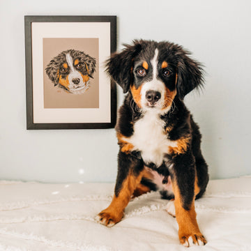 Persnickety Pets: Custom pet portrait, Jupiter, Brittany Tinsley Photography