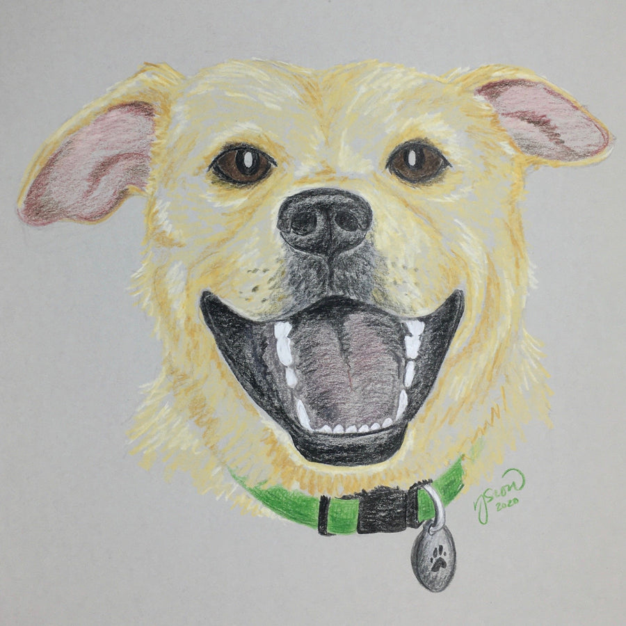 Persnickety Pets: pet portrait, Ben