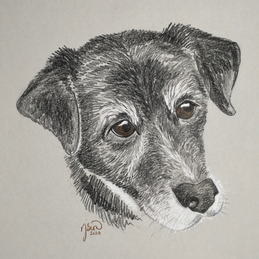 Persnickety Pets: pet portrait, Bruce