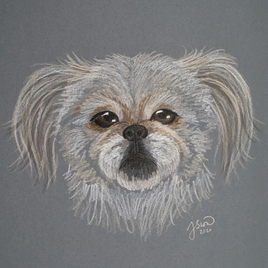 Persnickety Pets: pet portrait, Cotton