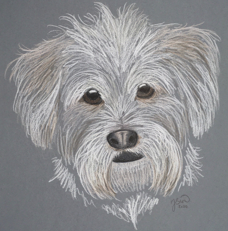Persimmon Peak: pet portrait, Denny