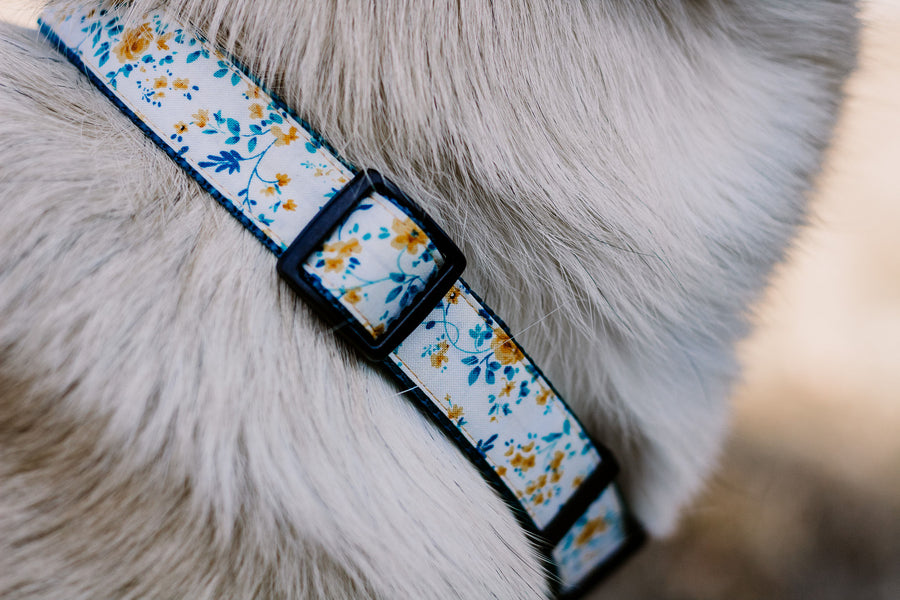 Persimmon Peak: closeup of Darla's golden roses dog collar, Andrea Cacho Photography