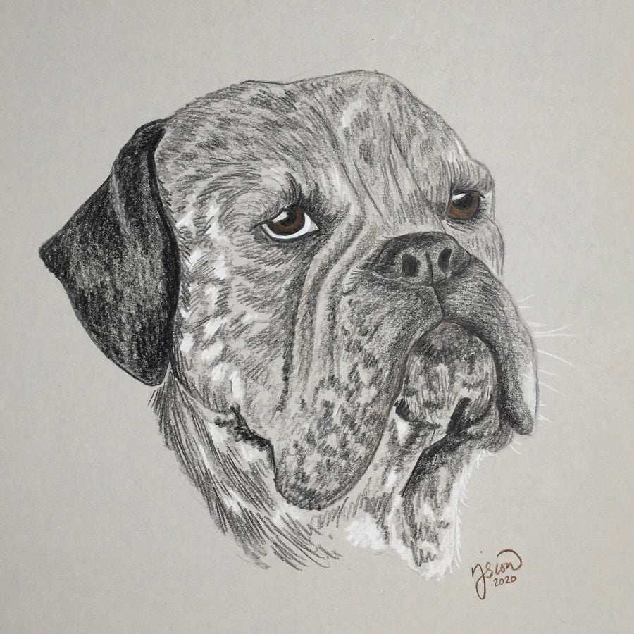 Persnickety Pets: pet portrait, Jesse