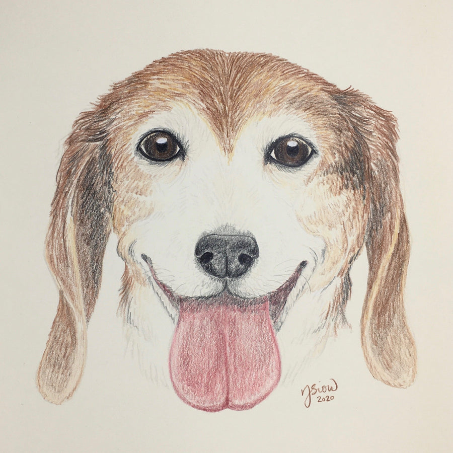 Persnickety Pets: pet portrait, Louie
