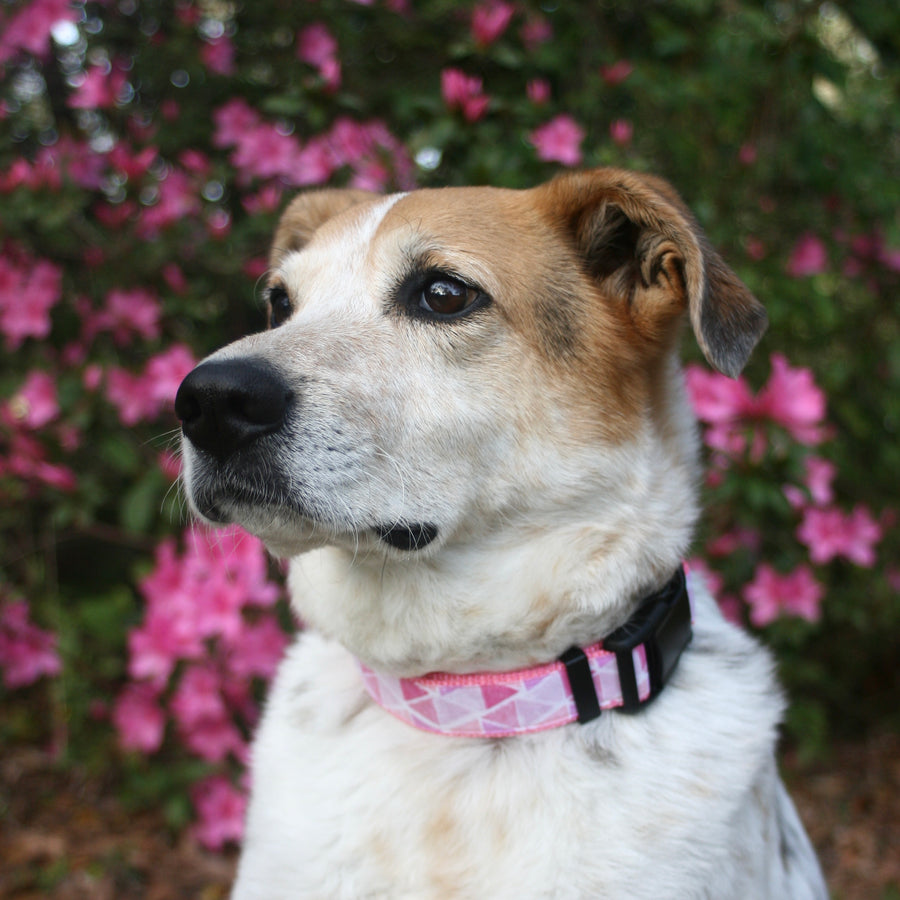 Pink Prisms Classic Dog Collar