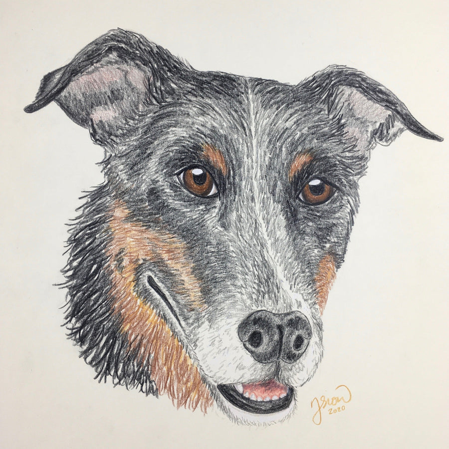 Persnickety Pets: pet portrait, Pullo