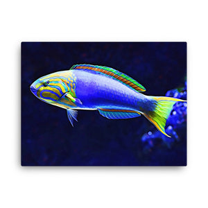 Photo of Banana Wrasse Reef Safe Canvas hanging on a white wall. This canvas features Thallasoma lutescens a Yellow and Purple wrasse fish from the Indian and Pacific Oceans. It is also known as the Yellow-Brown or Sunset Wrasse in the Aquarium Trade.