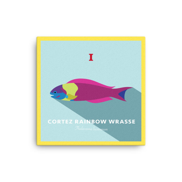 Cortez Rainbow Wrasse Canvas | 2D LE 1/1 16