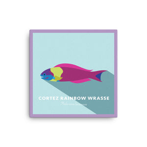 Cortez Rainbow Wrasse Canvas | 2D 16""