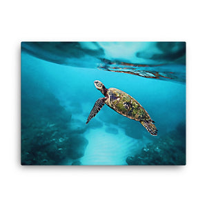 Sea Turtle Canvas