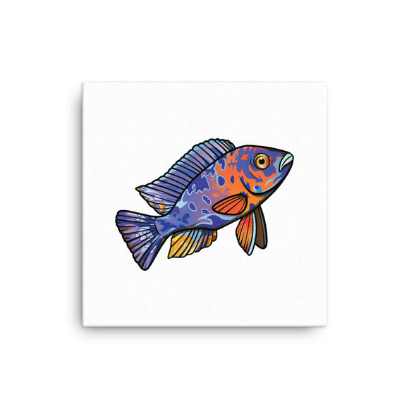 OB Peacock Cichlid Canvas 12