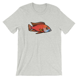 "Aulonocara sp. Rubescens ""Ruby Red"" T-Shirt 