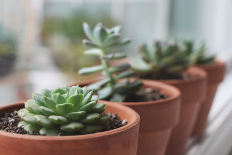 C&D's Guide to Succulents and Cacti