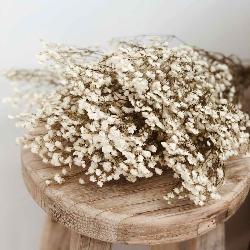 Baby's Breath Preserved Natural