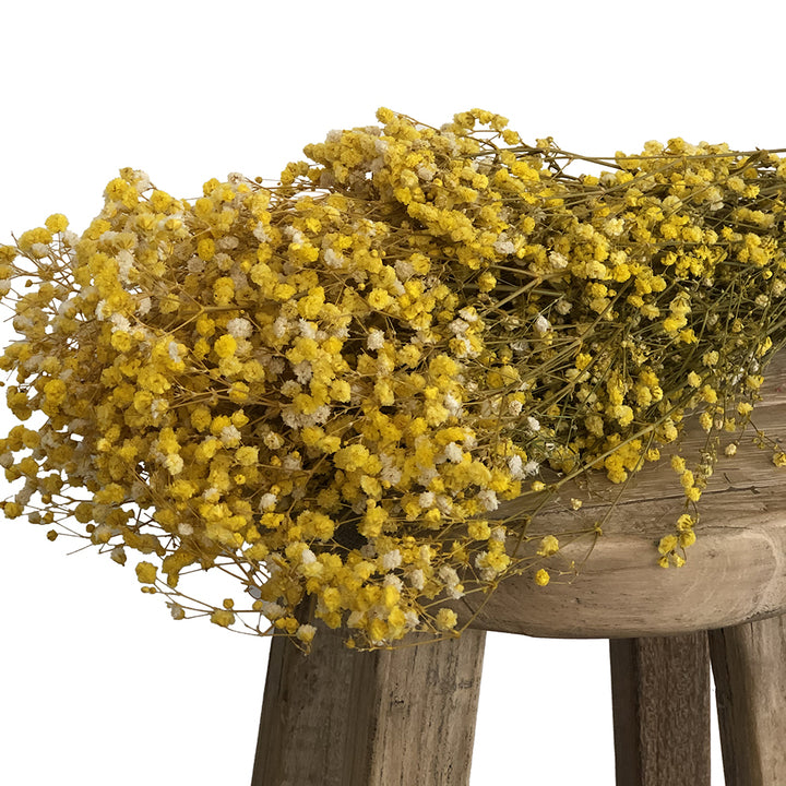 Load image into Gallery viewer, Baby's Breath Yellow