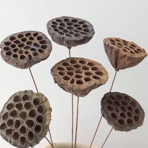 Load image into Gallery viewer, Lotus Pod - Dried