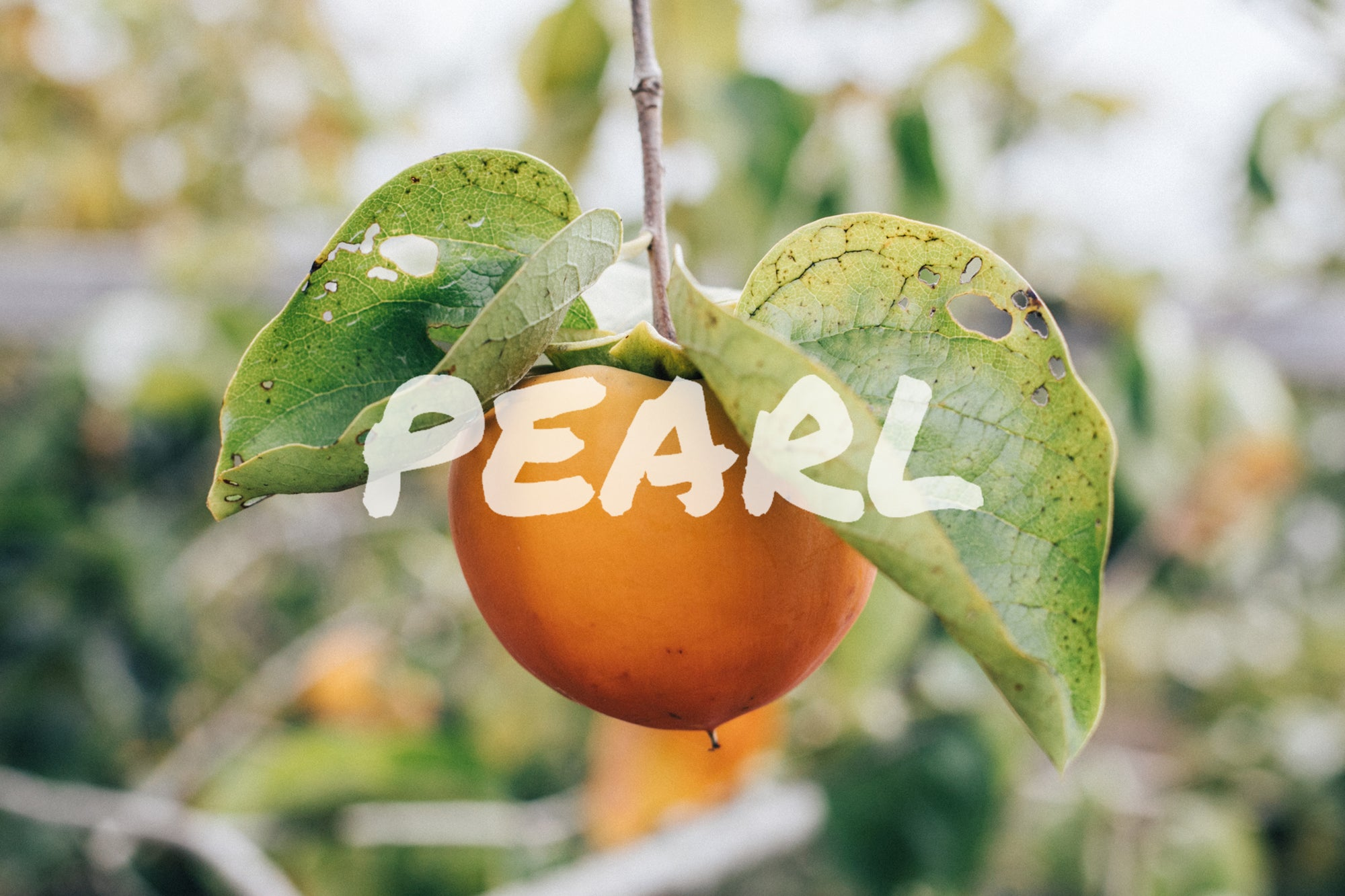 PEARL NOW AVAILABLE IN THE BOOCH BOX