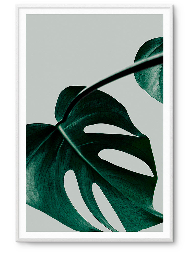 MONSTERA II LAMINA