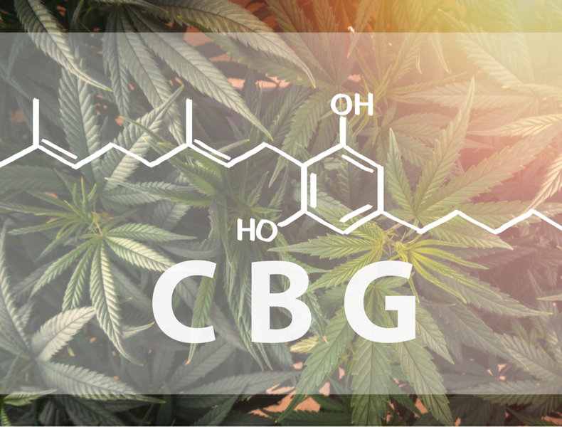 "What You Need to Know About CBG, ""The Mother of All Cannabinoids"""