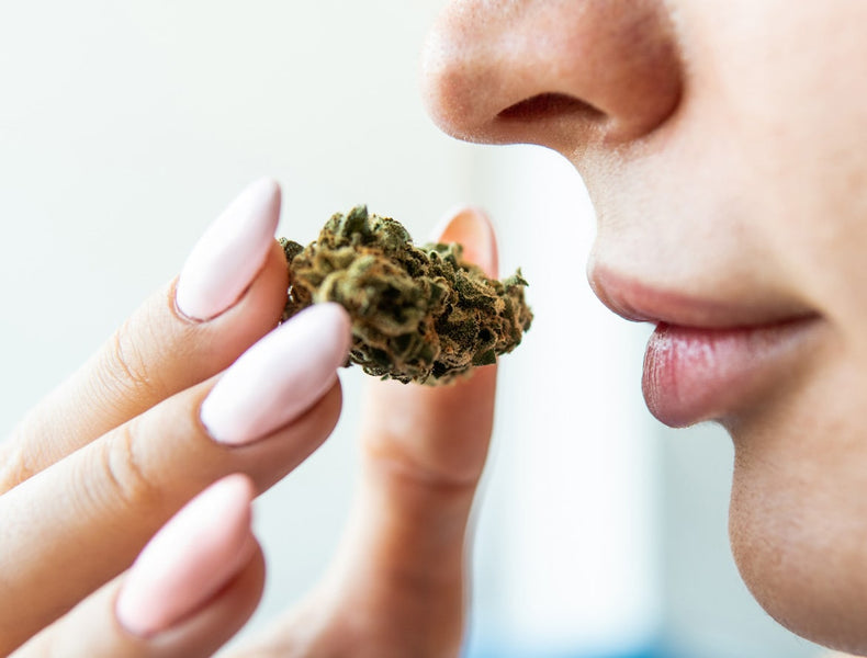 The Nose Knows: Why Terpenes are Critical Aspect of Any Wellness Regimen