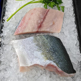 Kingfish fillets (sashimi grade)