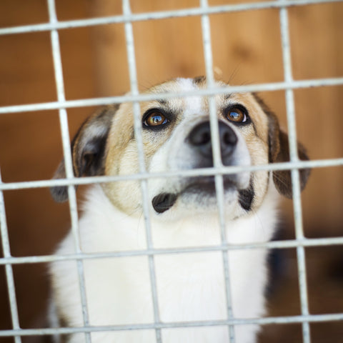 Dog in shelter waiting for home