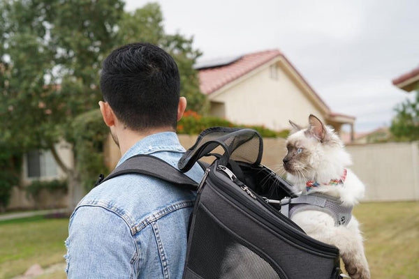 cat carrying backpack