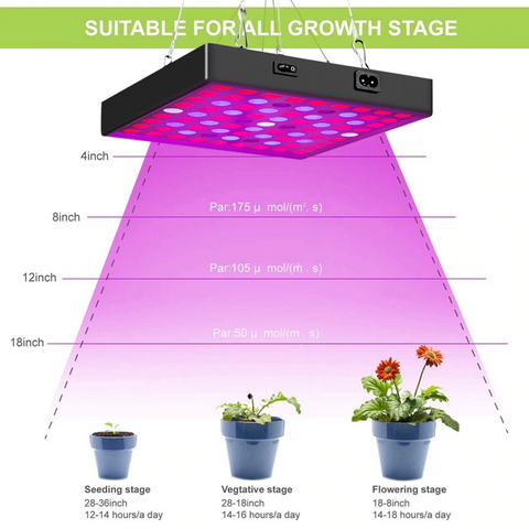 growing plants indoors with artificial light