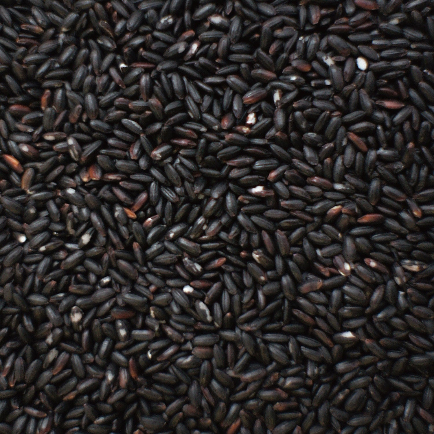 "HIEN BLACK RICE ""SHIHOU"""