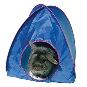 A rabbit inside a blue pop-up tent with purple trim.