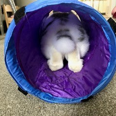 A blue tunnel showing a rabbit inside from behind.