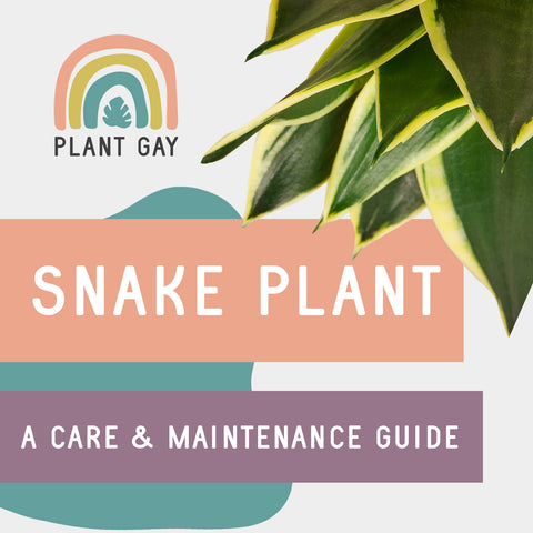 Snake Plant A Care & Maintenance Guide