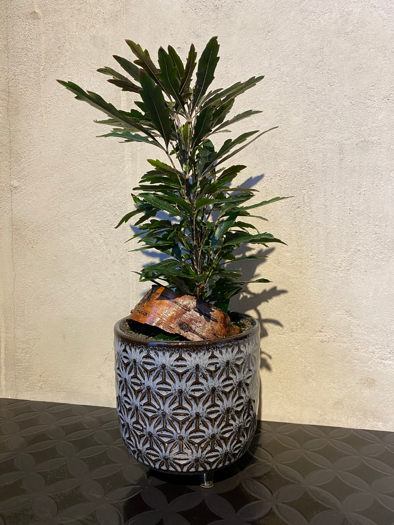 Potted Plants - Avelyn Florist in {{ shop.address.city }}, {{ shop.address.country }}