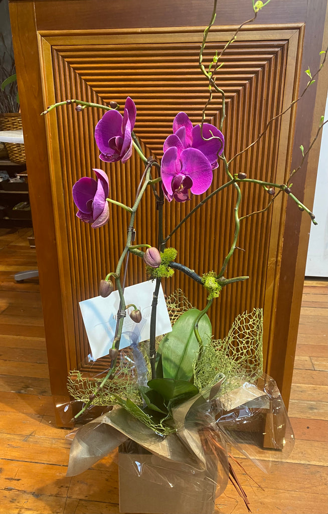 Orchid Planter (Mother's Day) Moth Orchid Vancouver - Avelyn Florist