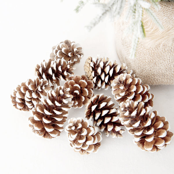 Natural White Tipped Pinecones - Set Of 10