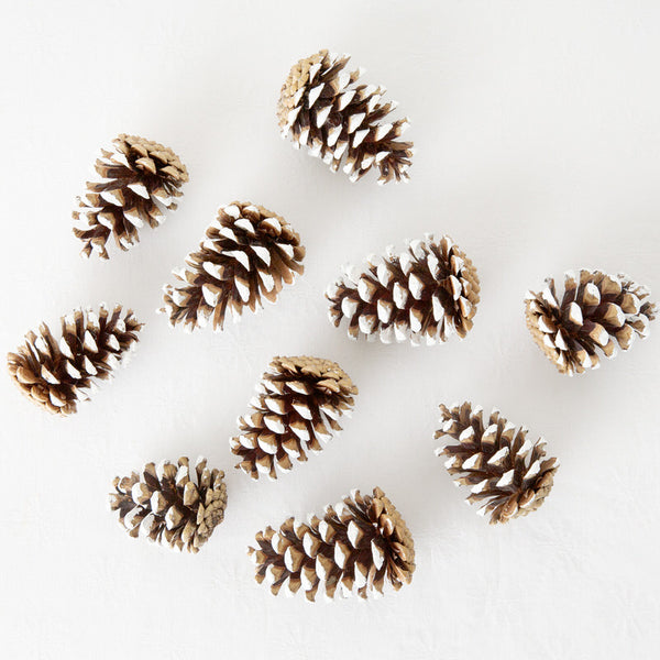 set of 10 frosted white dipped pine cones crafting